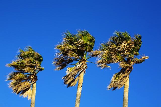 shutterstock_palm_trees_wind